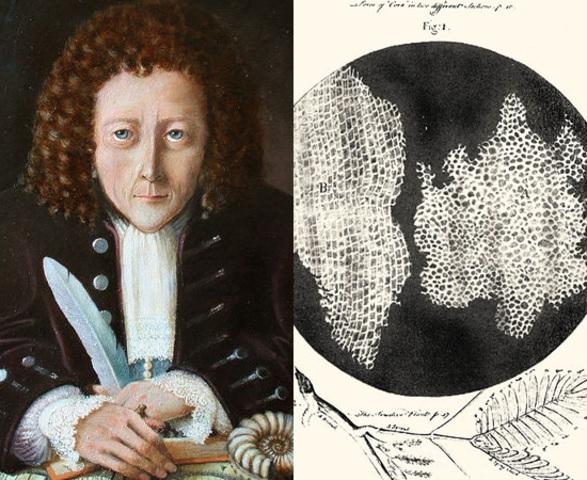 Hooke marca el momento de la teoria celular