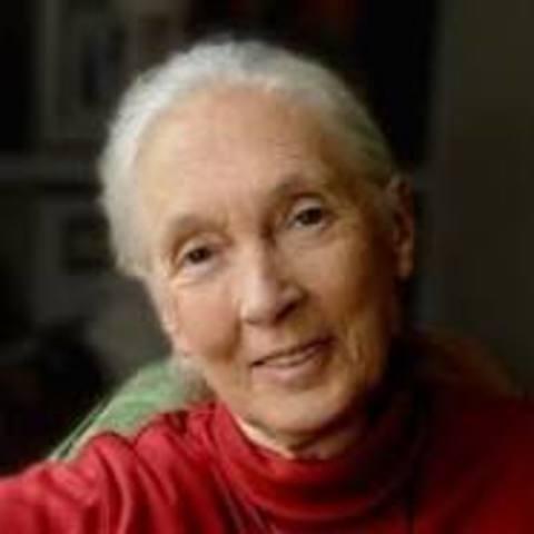 Jane Goodall is born