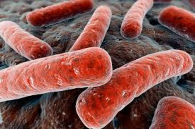 Serguéi Winogradski estudia las bacterias del azufre y las bacterias nitrificantes.