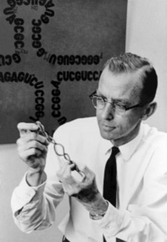 Robert W. Holley aísla los tRNA, moléculas que incorporan los aminoácidos activados en las proteínas