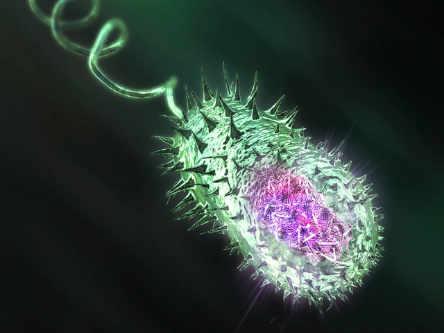 Heidelberg y col. descubren que Vibrio cholerae tiene dos cromosomas circulares