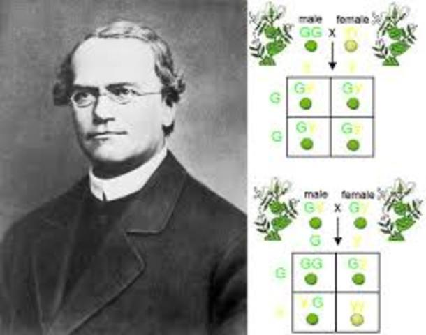 Mendel's Principles of Heredity or Mendelian inheritance