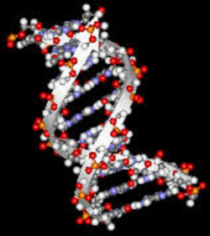 Starting DNA Recognition