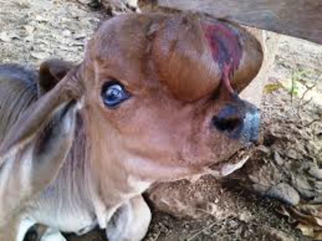 animales enfermos por un microorganismo patógeno