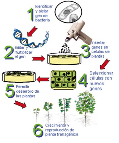 primer congreso intenacional de microorganismos modificados geneticamente