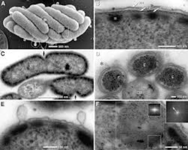 Primera observacion de microorganismos vivos