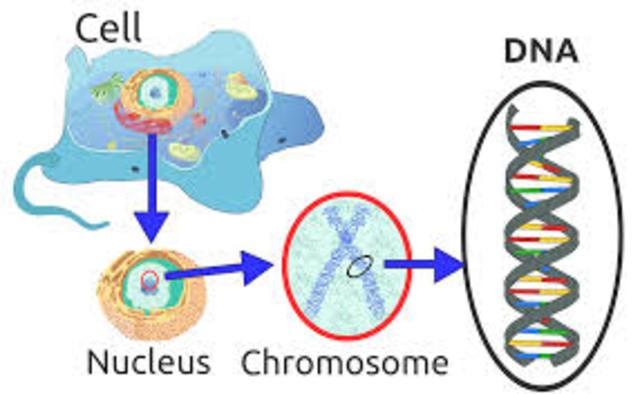 DNA (ácido nucleico) en el esperma de trucha