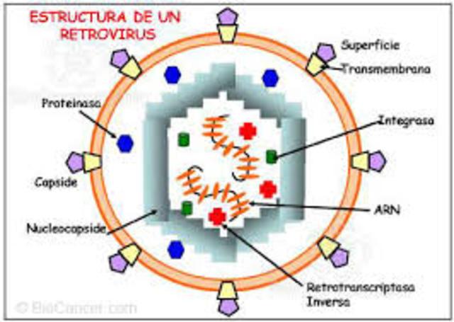 Retrovirus que produce tumores (sarcomas) en pollo