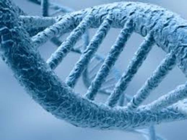 DOBLE HELICE, ESTRUCTURA DE ADN
