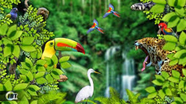 Biodiversidad en los Trópicos