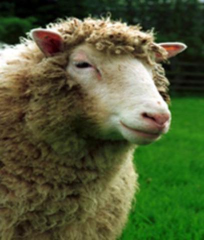 Investigadores, liderados por Ian Wilmut clonan al primer mamífero, la oveja Dolly.