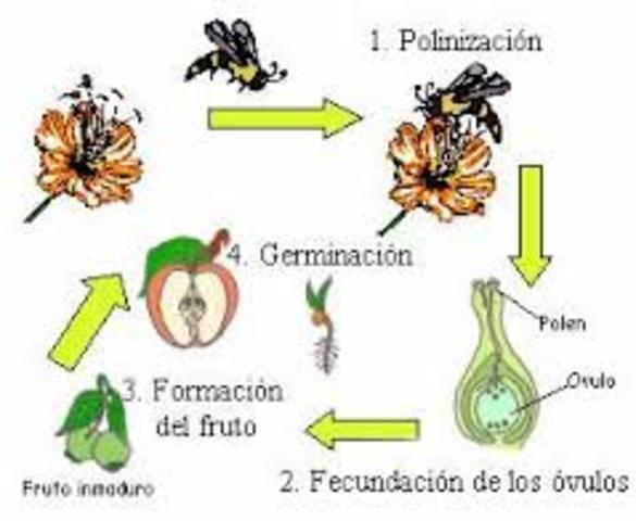 Se confirma la reproducción sexual de las plantas.