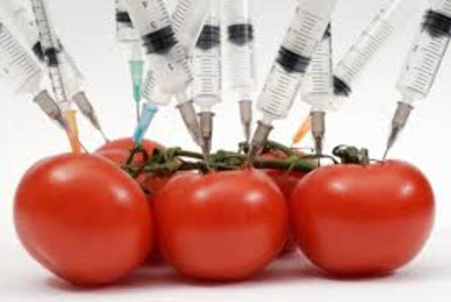 El primer tomate transgénico