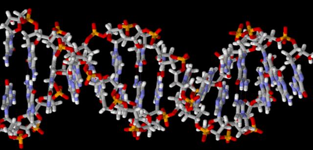 ESTRUCTURA DE DOBLE HELICE DEL ADN