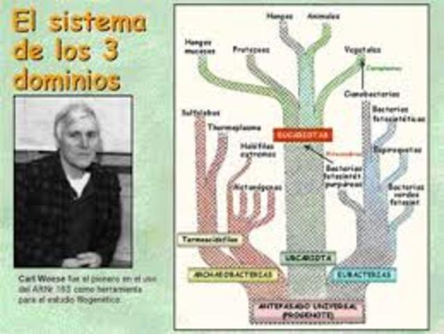 Sistema de los tres dominios