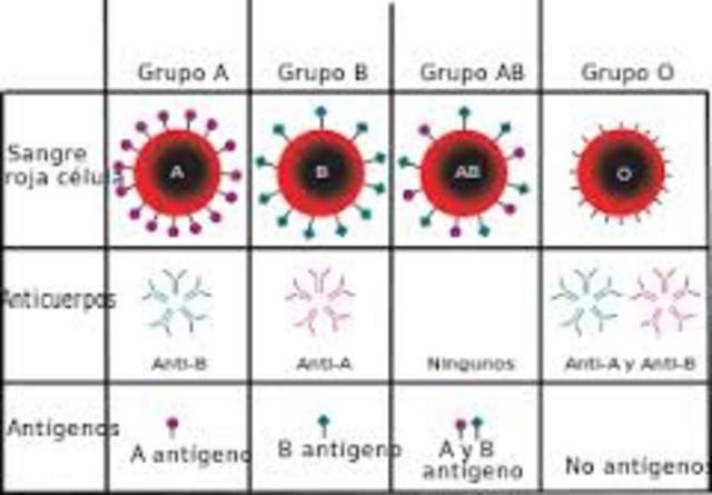 Grupos sanguineos ABO