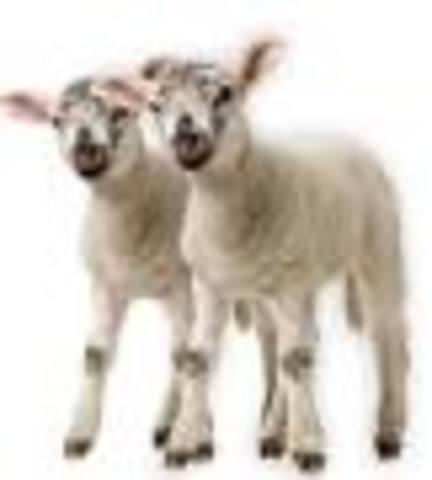 Invencion de la clonacion animal