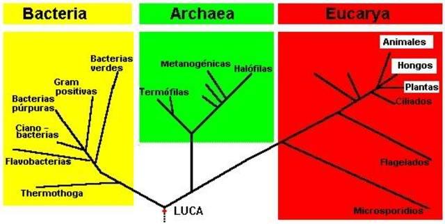 El sistema de tres dominios