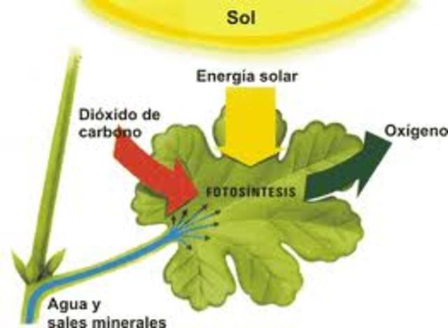 fotosistesis