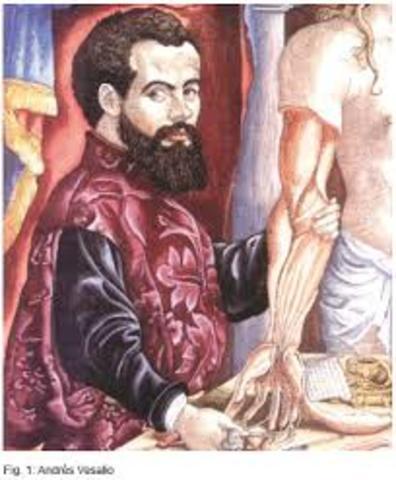 estructura del cuerpo humano  Andres Vesalio