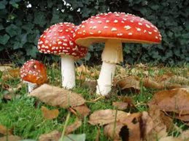 Clasificación del Reino Fungi