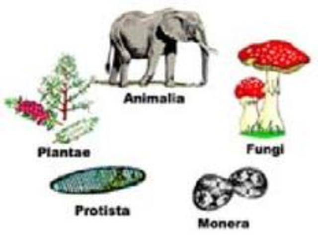 Esquema de clasificacion de los 5 reinos bioticos