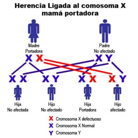 teoria cromosomica