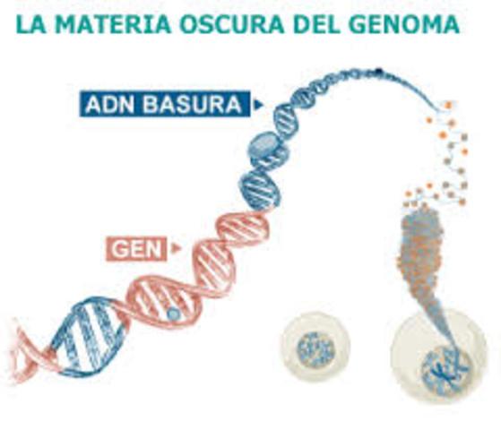 El 'ADN basura' no es un desecho