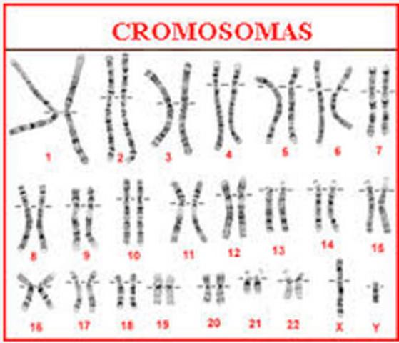 Se identifican 23 pares de cromosomas