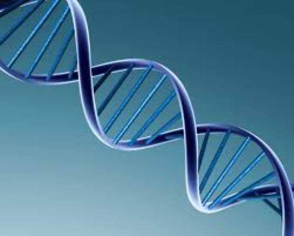 CADENA DE ADN EN FORMA DE HELICOIDE