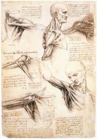 Leonardo da Vinci (Estudio sobre los animales)