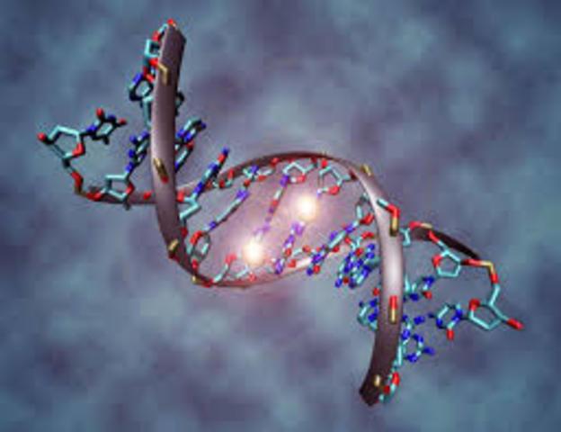 Genoma Humano (1990-2001)