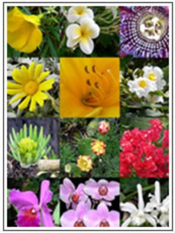 Estudio de plantas