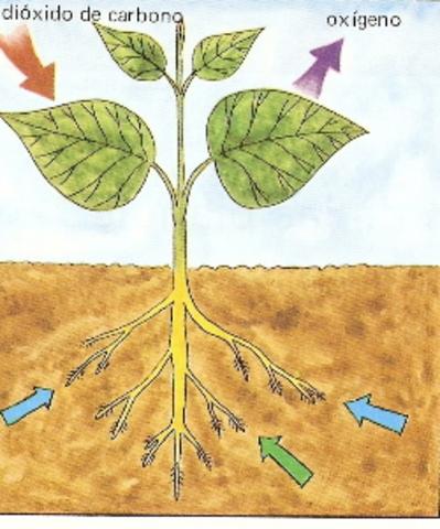 Absorcion del aire en las plantas