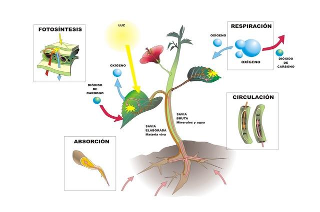 Las plantas y el aire