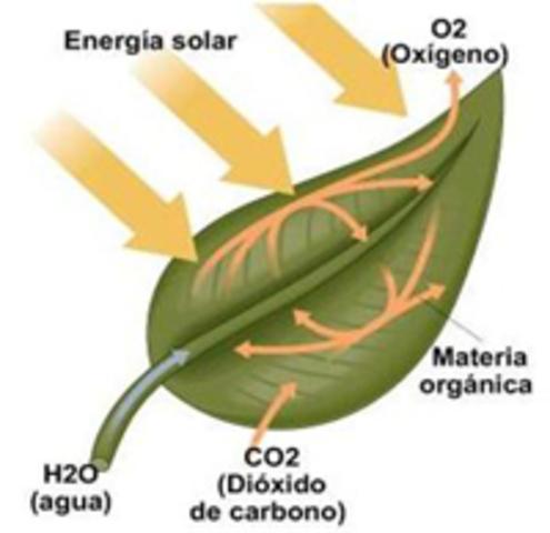 Determina la presencia de bioxido de carbono