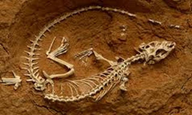 Paleontologia