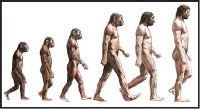 Primer mecanismo de evolucion