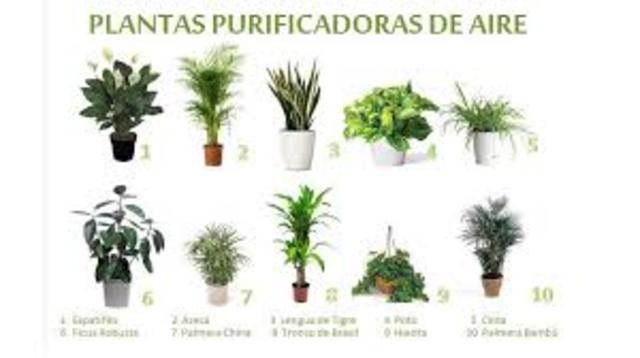 Depuracion de aire por las plantas