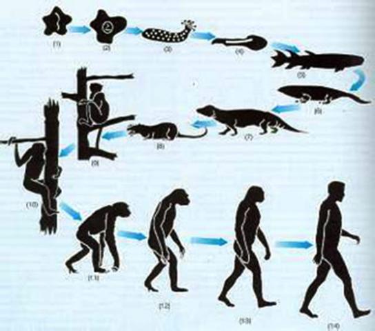 Darwin hace publica teoria sobre la evolucion de las especies