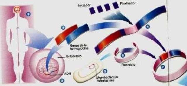 las celular reproductivas constituyen un linaje continuo