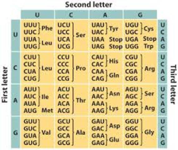 Se descifra el código genético completo del ADN.