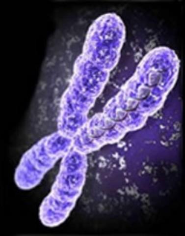 Se identifican 23 pares de cromosomas en las células del cuerpo humano