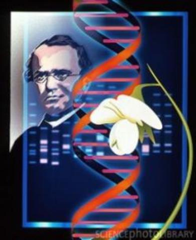 Reglas de la herencia Genética