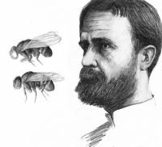 La teoría de los genes