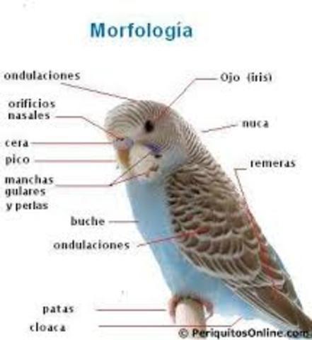 Las principales disciplinas de la biología son las siguientes: