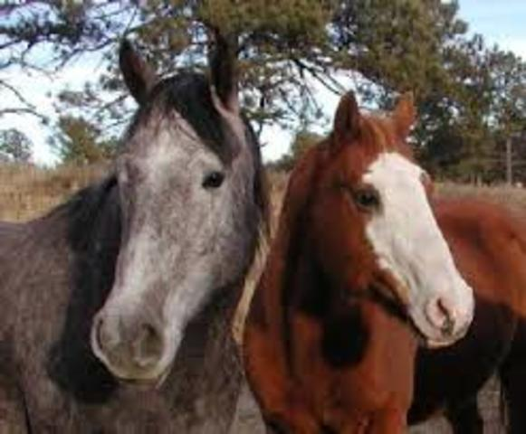 The Shoshone tribe gives Lewis and Clark some horses