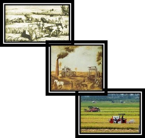 ¡Y todo cambió en la agricultura! (Revolución agrícola)