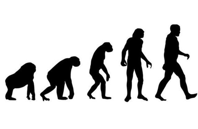 Evolution (20)