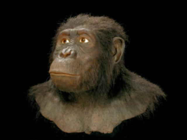 Australopithecus anamensis